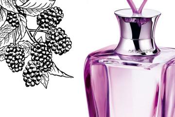 perfume promesse